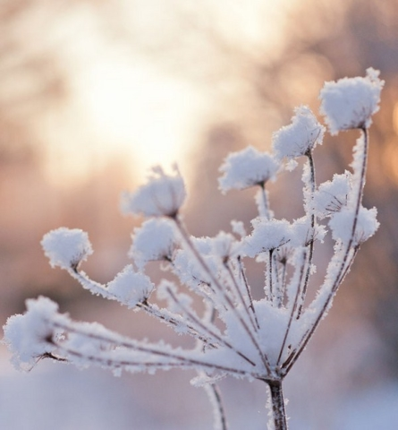 Froid hiver nature