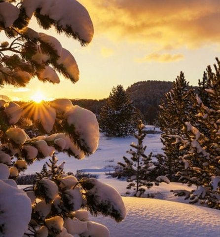 Froid hiver neige sapins