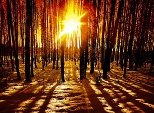 Froid hivert foret